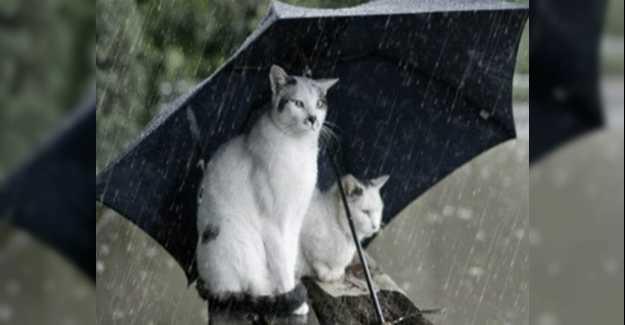 Hava Sıcaklığı 10 Derece Düşecek Yağış Geliyor…