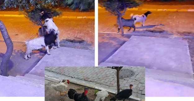 Bu Hayvanlarla Yaşamaya Mecbur muyuz? ÖZEL HABER
