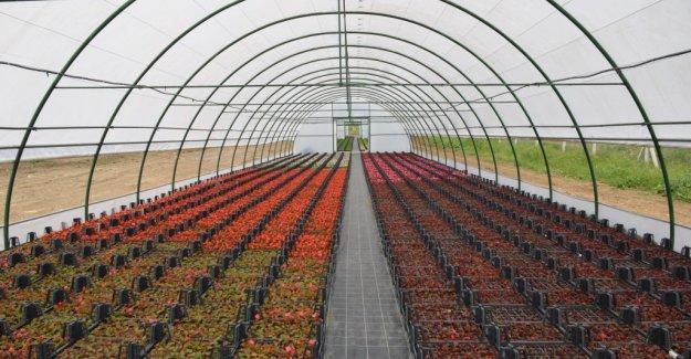 Çiçek ve Sebze Yetiştirmek İster Misiniz?