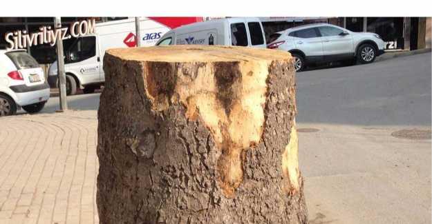 Bu Ağacı Niye Kestiniz?
