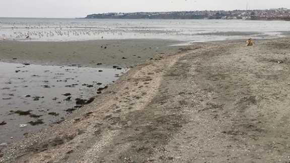 Silivri'de Deniz Suyu 100 Metre Çekildi Haberleri...