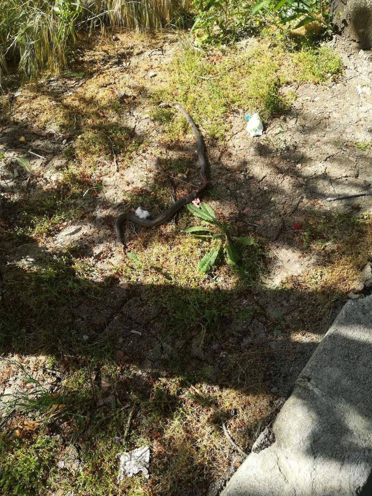 Silivri'de 3 Yaşındaki Çocuk İki Yılan Görünce Dehşete Düştü