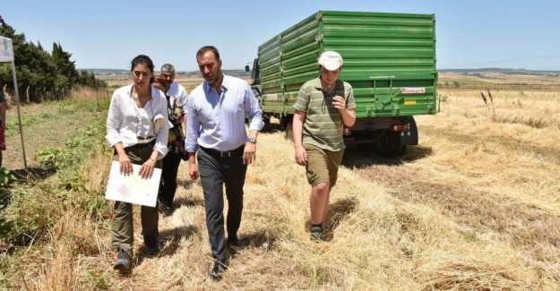 Başkan Yılmaz ATA Buğdayı Hasadına Katıldı...