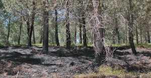 Orman Yangınına Polis Soruşturma Başlattı...